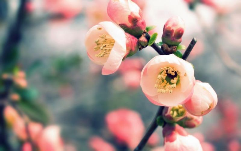 봄_고화질_배경화면,꽃_배경_이미지.jpg