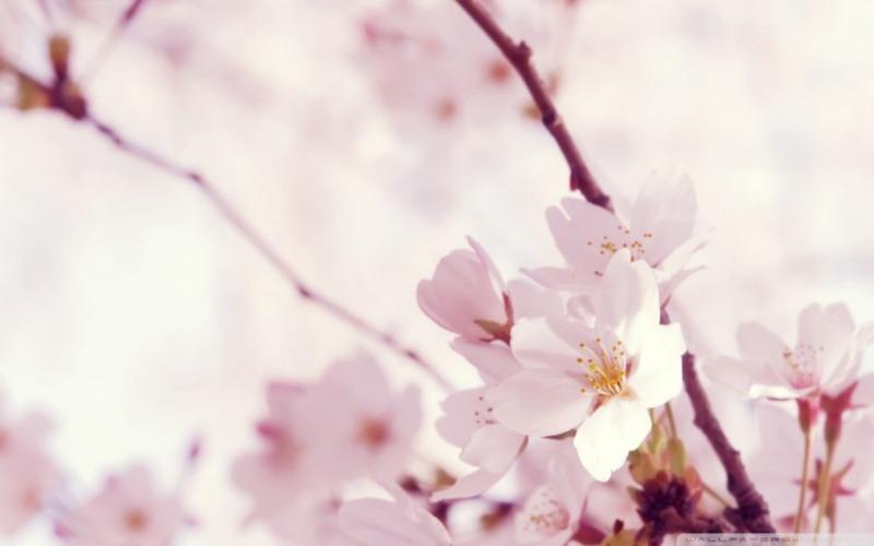 봄_고화질_배경화면,꽃_배경_이미지_(2).jpg