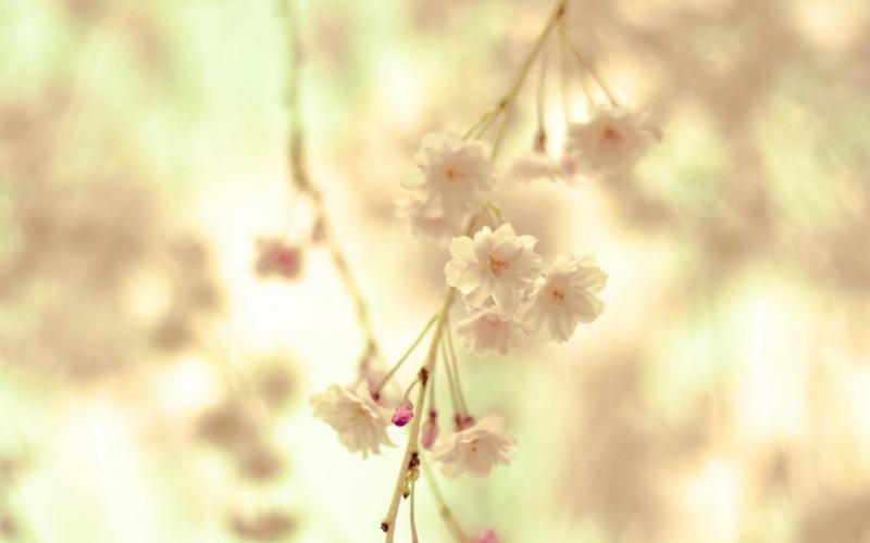 봄_고화질_배경화면,꽃_배경_이미지_(3).jpg