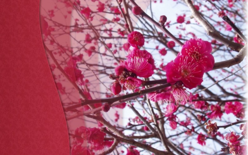 봄_고화질_배경화면,꽃_배경_이미지_(4).jpg