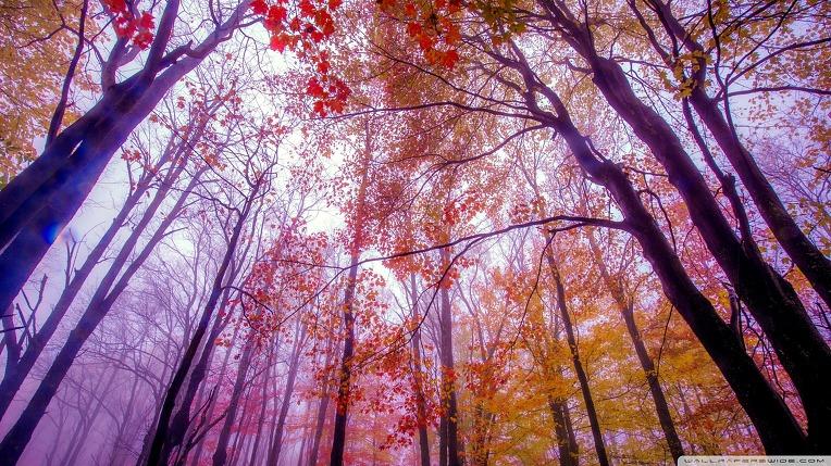 foggy_colors-wallpaper-1920x1080.jpg
