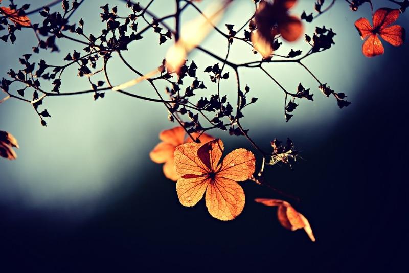 flower-3876195_960_720.jpg