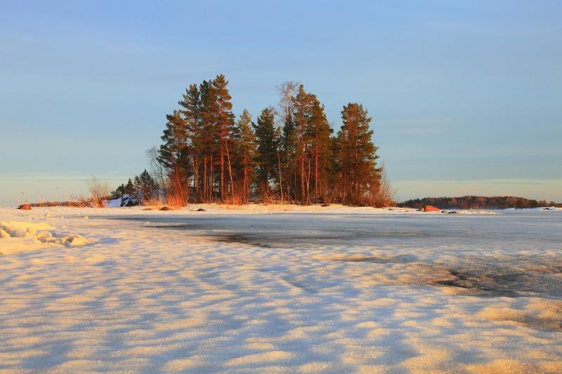 winter_landscape_trees-64366.jpg
