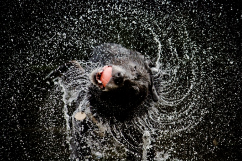 dog-Motion-dogs-wet-water-oneaday-ball-Jake-action-spray-explore-photoaday-shake-pictureaday-photooftheday-project365-explored-project3651-photoftheday-project366-geocity-camera-make-canon-exif-make-canon-exif-iso-sp.jpg