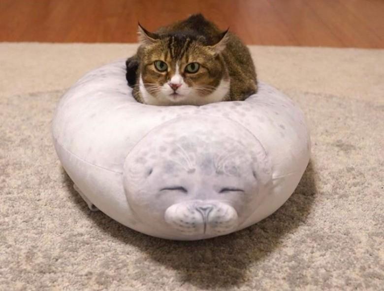 고양이용 침대.jpg 사진